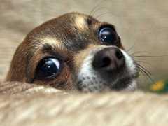 ESPANHA scared-dog thumb m