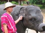 Marcio elefante0