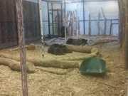 US iowa zoo SAPO6 thumb