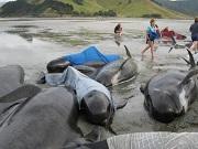 novazelandia baleias0