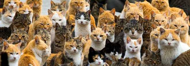 JAPAO 2015-03-03t065939z 105387823 gm1eb330nob01 rtrmadp 3 japan-cats thumb d