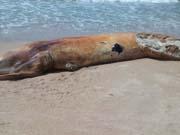 RJ riodasostras baleiaenc thumb