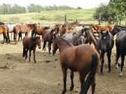 RS bagé cavalos copy