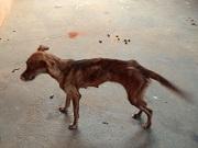 Mulher recebe multa de R$ 18 mil por maus-tratos a animais em Bauru, SP