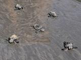 pe grrecife tartarugas0