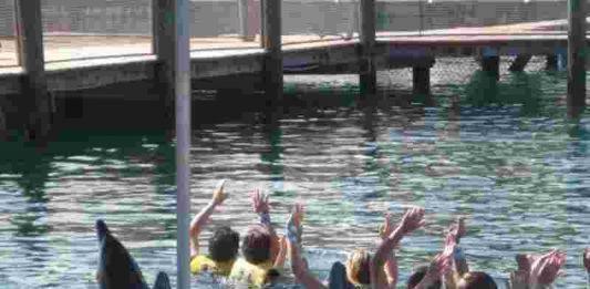 A verdade perturbadora por trás do seu nado com golfinhos