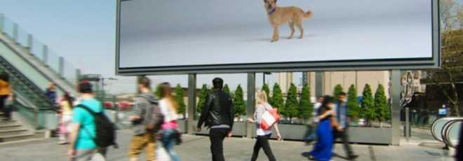 Cães virtuais presos em outdoor seguem pessoas em campanha de adoção