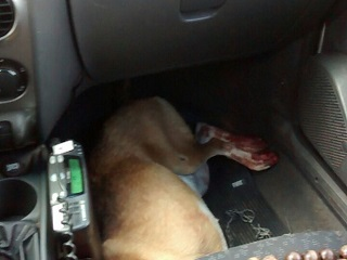Homem é detido após arrastar e machucar cadela no sul do Tocantins