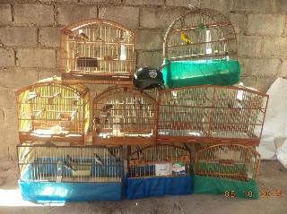 Quase 20 pássaros silvestres sem registro são apreendidos em Linhares, ES