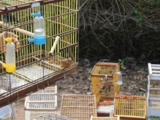 Fiscalização liberta quase 2 mil animais no sertão de Alagoas