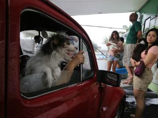 Unidade móvel do Centro de Controle de Zoonoses castra 690 animais em 30 dias em Manaus (AM)