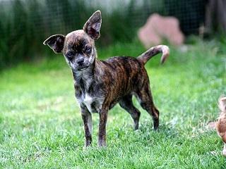 Tabatinga (AM) reformula plano de captura de cães de rua