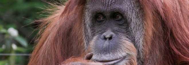 Zoológico na Argentina não terá mais animais exóticos