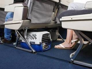 Animais serão obrigados a passar por detector de metais em aeroportos