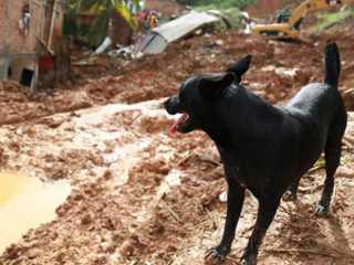 Cães sentem falta de tutores mortos em tragédia na San Martin, em Salvador, BA