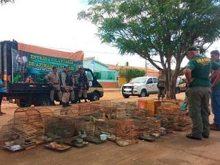 Secretário de município baiano é flagrado com animais silvestres durante operação, diz PRF