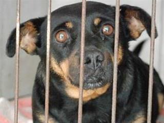 Maus-tratos contra animais: onde denunciar em Toledo, PR?