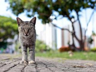 Grupos buscam solução para abandono de gatos no Parque do Cocó, em Fortaleza, CE