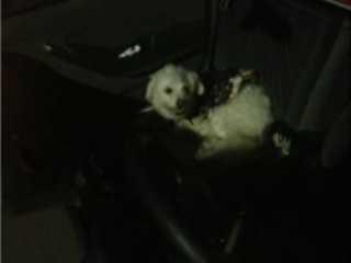 Cão fica trancado em carro por três horas no DF, e grupo aciona polícia