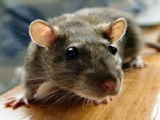 Projeto que permite o uso de animais em pesquisas será debatido em audiência pública