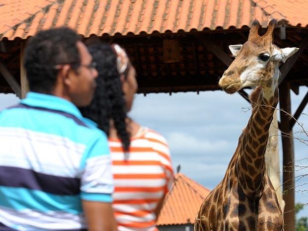 ONGs de defesa animal apontam problemas em Zoológico de Brasília