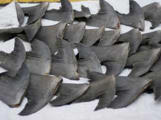 Equador desmantela rede de tráfico de barbatanas de tubarão