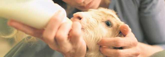 Santuários de animais em Madrid: voltar a viver