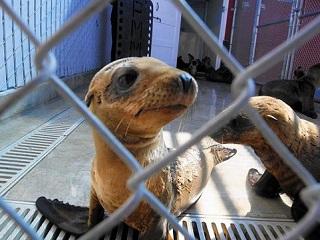 EUA: Legisladores da Califórnia propõem penalidades mais severas para crueldade animal