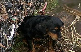 Bombeiros resgatam cachorro dentro de córrego em Rio Verde, GO
