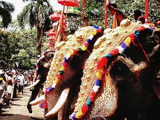 Elefantes farão parte do festival na Índia – governo se recusa a interferir
