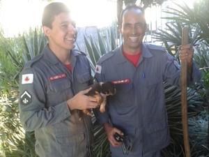 Filhotes de cachorro ficam presos em buracos e são resgatados em Araxá (MG)