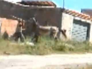 Vizinhos denunciam tutor de cavalo por maus-tratos em Minas Gerais