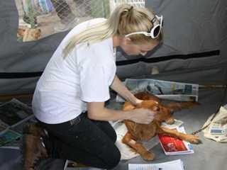 Programa de castração volta a atender cães e gatos de Conselheiro Lafaiete, MG