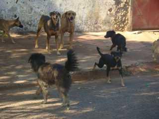 Cerca de 12 mil animais estão abandonados em Uberaba, MG