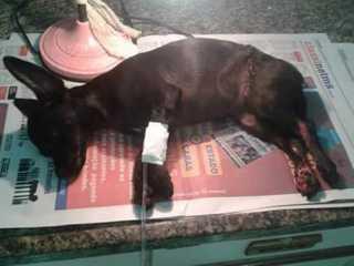 Cadela é mutilada com faca por adolescentes em Campo Grande, MS