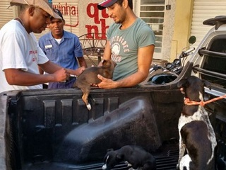 Força-tarefa já vacinou mais de 21 mil cães e gatos em Corumbá (MS)