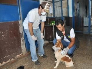 MS: CCZ de Dourados recolhe animais abandonados e encaminha pra adoção