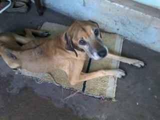 200 cães e gatos correm o risco de ficarem sem abrigo no MT