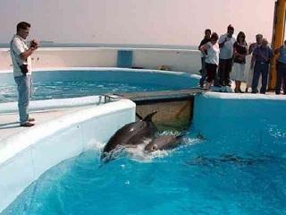 ONG denúncia ilegalidade e maus-tratos a golfinhos em aquários no México