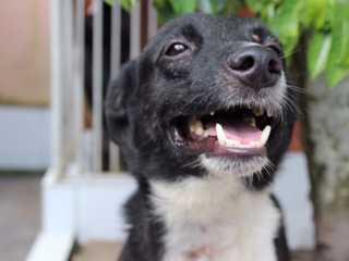 Polícia Civil cadastra cães e gatos para ação social em Belém, PA