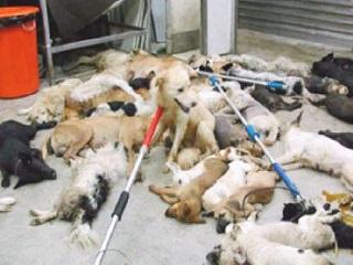 Extermínio de animais doentes preocupa ONGs na PB e projeto causa polêmica