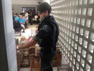 Rinha de aves é flagrada e mais de 20 pessoas são detidas em João Pessoa, PB