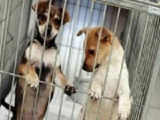 PB: Zoonoses de João Pessoa recomenda castração de animais