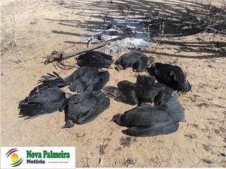 Animais são encontrados mortos por crime ambiental em zona rural de Nova Palmeira (PB)