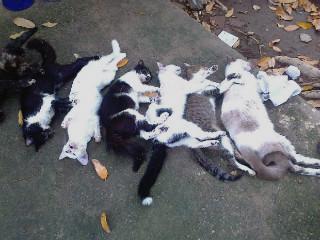 Extermínio de gatos choca moradores em Paulista, PE
