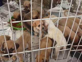 PI: Teresina pode ter castração de cães e gatos para população carente
