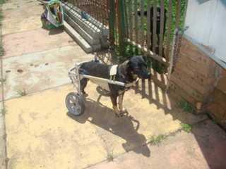 Feira neste sábado em Curitiba terá animais deficientes para adoção