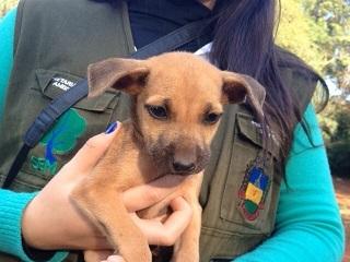PR: Técnicos da Secretaria de Meio Ambiente de Apucarana resgatam filhotes de cães abandonados