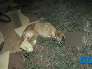 PM mata cachorro com tiro na cabeça