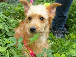 Ela está traumatizada, diz cuidador sobre cadela abandonada pelo tutor em Curitiba, PR